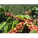 La Boheme Café Espresso Blend - 226 g, zrnková káva